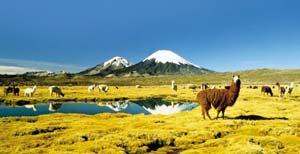 Parque Nacional Lauca, Región de Arica y Parinacota